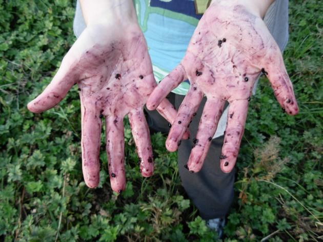 bramble hands